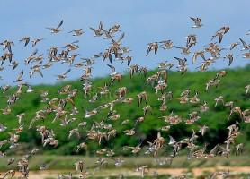 Parc national Bundala: le petit coin de paradis sri-lankais