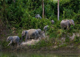 Parc national Kaziranga: le paradis terrestre des animaux