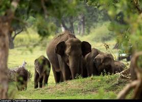Parc national Minneriya: découvrez le plus grand ballet d'éléphants