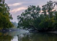 Parc national Sundarbans