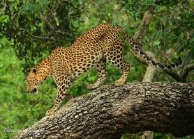Parc national Yala: la magnifique réserve de l'écosystème