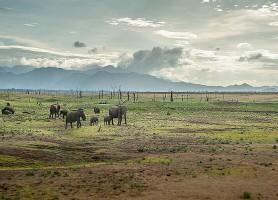 Parc national d'Uda Walawe: la sublime réserve des éléphants