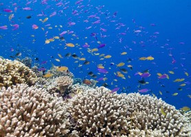 Récif de Tubbataha: le flamboyant chapiteau sous-marin