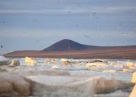 Île Wrangel