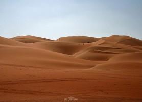 Désert de Liwa: explorez ce splendide espace