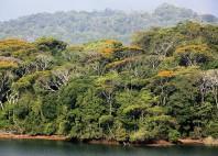 Lac Gatún