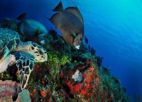 Récif de Palancar: au cœur d'une roche pas comme les autres!