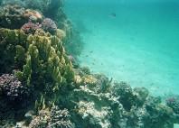 Sharm El Lulli
