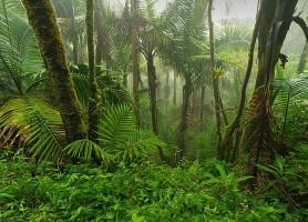 Forêt nationale d'El Yunque: la majestueuse cité verte