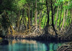 Parc national Los Haitises: une cathédrale naturelle en mer