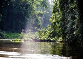 Parc national de Tortuguero: une merveille naturelle