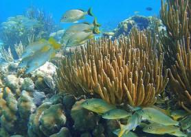 Réserve marine de Hol Chan: le fantastique royaume des mers