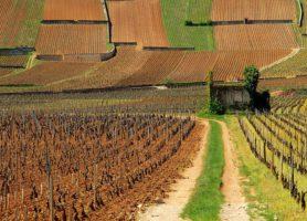 Beaune: la capitale des vins de Bourgogne