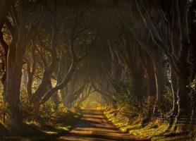 Dark Hedges: offrez-vous une contemplation de la colonne magique