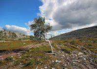 Parc national de Pallas-Yllästunturi