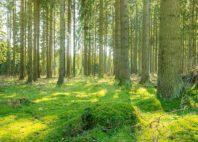 Parc national du Harz