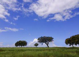 Alentejo: offrez-vous un séjour dans cette merveilleuse région