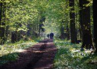 Forêt de Białowieża