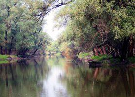 Kopački Rit: le sosie croate de l'Amazonie