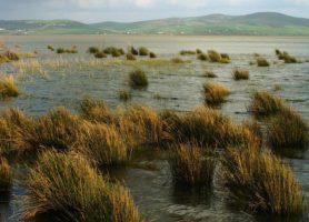 Lac Ichkeul: l'éblouissant havre de paix