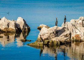 Lac Skadar: l'eldorado des ornithologues