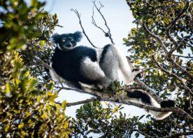 Andasibe-Mantadia: un site naturel de rêve