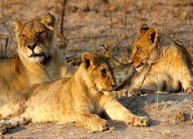 Antelope Park: pour des vacances magiques et inoubliables
