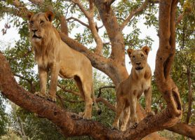 Fathala Reserve : un site naturel charmant