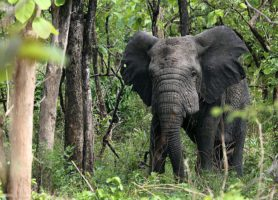 Fazao-Malfakassa: un site naturel incontournable