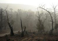 Forêt de Day