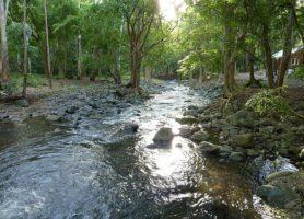 Gorges de Rivière Noire: randonnées en zone tropicale