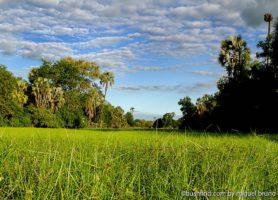Gorongosa: offrez-vous cette exceptionnelle aventure