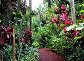 Jardin des Parfums et des Epices: le chatoyant parc botanique