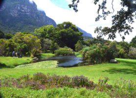 Jardins de Kirstenbosch: un endroit vraiment magique