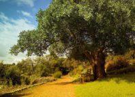 Jardins de Kirstenbosch