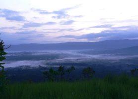 Forêt de Kakamega: un impressionnant espace vert