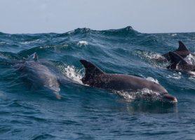 Kisite-Mpunguti: un extraordinaire fond marin d'une richesse surabondante