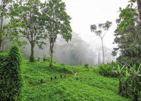 Kokoda: découvrez ce sentier chargé d'histoire
