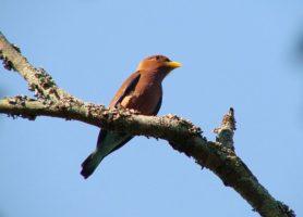 Kuimba Shiri Bird Park: le royaume des oiseaux