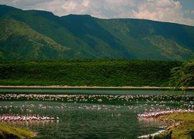 Lac Bogoria: le paradis des flamants roses