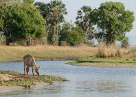 Parc national de Liwonde