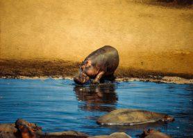 Manovo-Gounda St. Floris: au cœur de la nature africaine