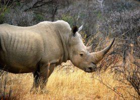 Mokolodi: découvrez ce superbe site botswanais