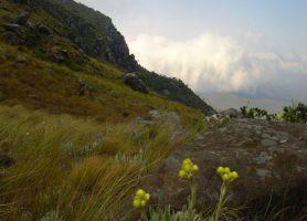 Mont Nyangani: une beauté naturelle et des attractions inouïes