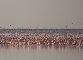 Nata Bird Sanctuary: une envolée spectaculaire