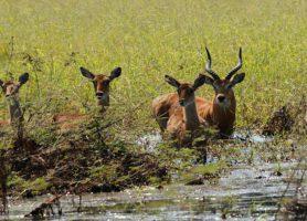 Niokolo-Koba: découvrez cette réserve majestueuse