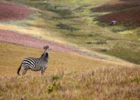 Parc national de Nyika