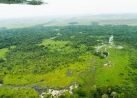 Parc National d'Odzala