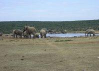 Parc national des Éléphants d'Addo