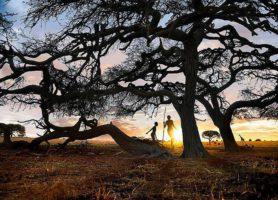 Parc national Mapungubwe: sur les traces du royaume Mapungubwe